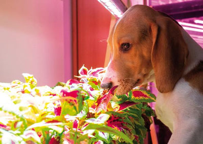 Got Pets? Here Are 10 Reasons Why They'll Adore Click & Grow!