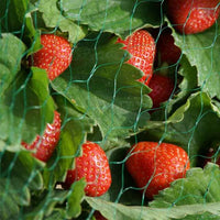 Protective Fruit & Crop Netting  15mm mesh, 2m x 10m