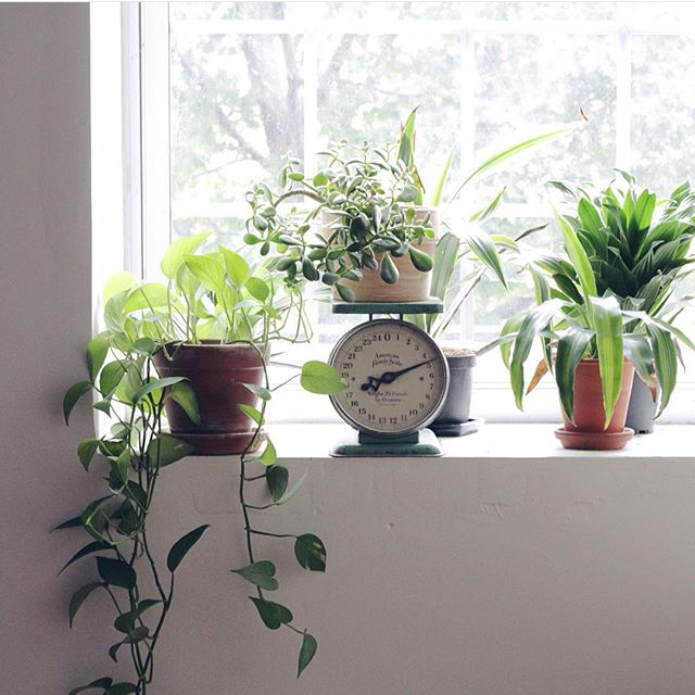 Window ledge filled with plants in my New England based studio