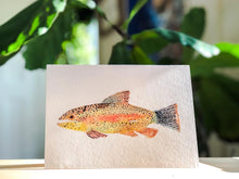 Load image into Gallery viewer, Rainbow Trout