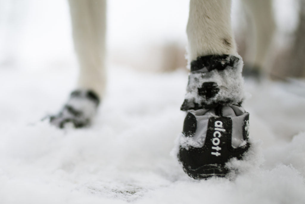 Explorer Adventure Boots for Dogs by Alcott