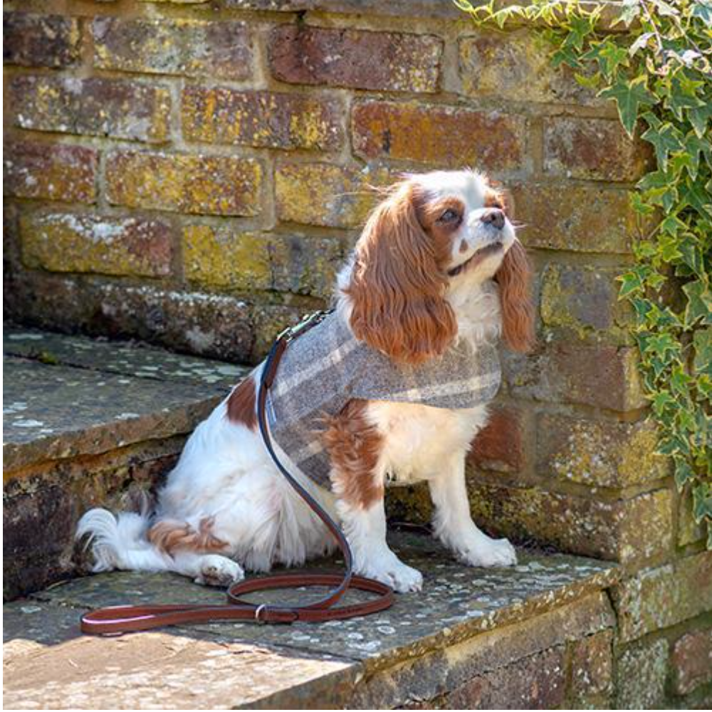 Slate Tweed Soft Dog Harness by Mutts & Hounds