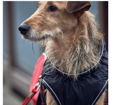 Load image into Gallery viewer, Uppsala Cozy Winter Dog Coat by Hunter: Red