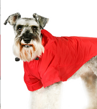 Load image into Gallery viewer, Explorer Windbreaker Sport Jacket by Urban Pup: Last One