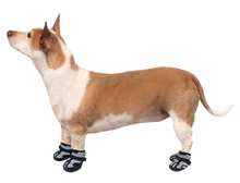 Load image into Gallery viewer, Explorer Adventure Boots for Dogs by Alcott