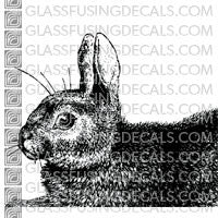 Rabbit Closeup - Medium 4x4""