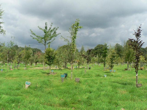 Woodland burial ground in the UK