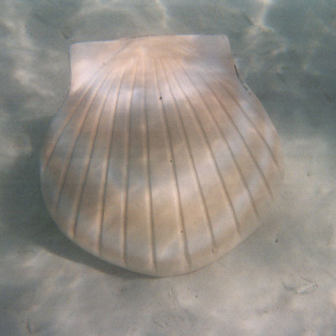 Shell Biodegradable Cremation Urn - Sand