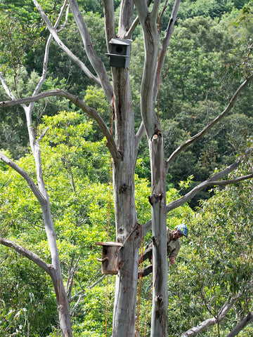 Two fully installed Wildbnb habitat boxes on eucalypt tree