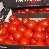 5kg Box of Tomatoes
