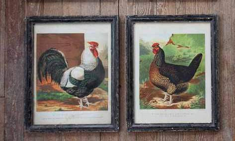 Framed Dorking Chicken Prints
