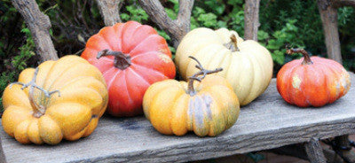 Late Summer Harvest Pumpkins