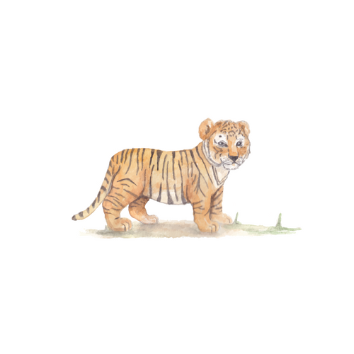 Safari Tijger welpje muursticker - Safari muursticker collectie