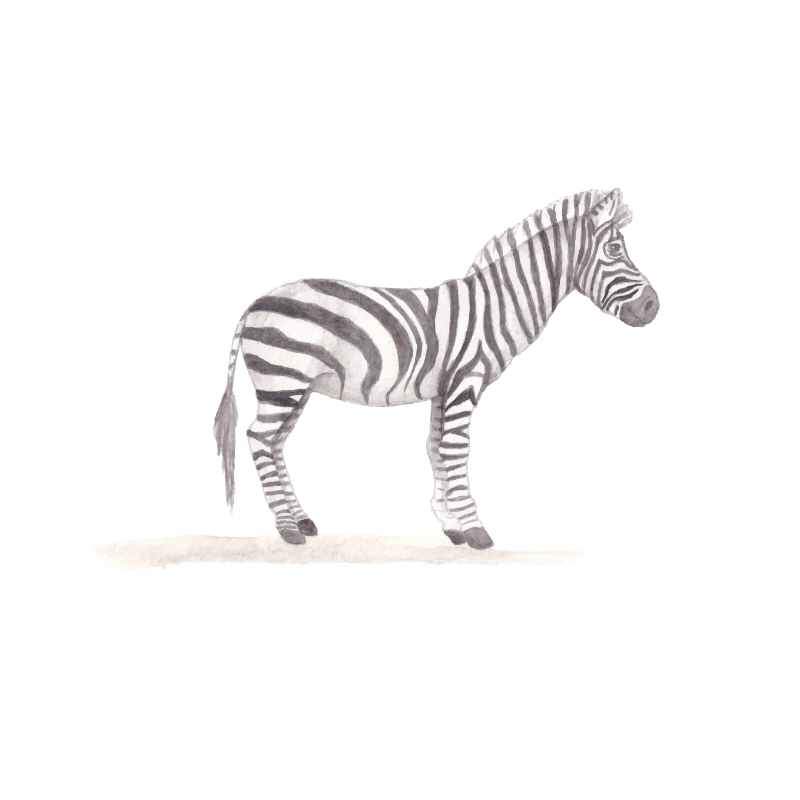 Safari - Zebra muursticker - LM Baby Art