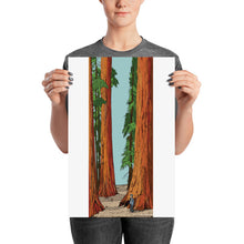 Load image into Gallery viewer, Sequoia Poster