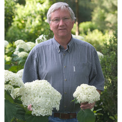 Man holds annabelle hydrangea flower in his left hand and Incrediball in his right hand.