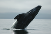 The Best Way To Go Whale Watching In San Diego