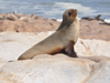The 5 Best Spots to View Seals and Sea Lions in La Jolla