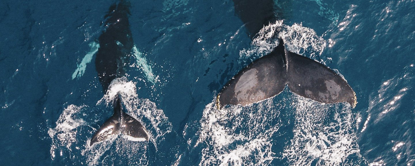human interaction while whale watching should not include touching