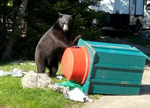 Photo of bear tipping over garbage can