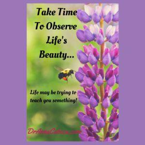 Take Time to observe life's beauty