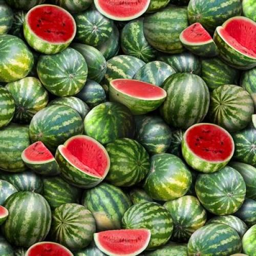 EZS Food Festival Watermelons 563-GREEN - Cotton Fabric