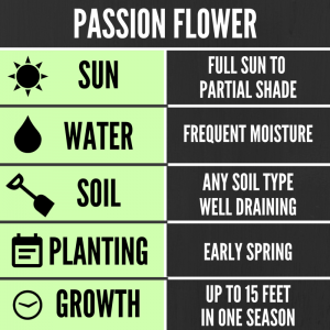 Tips for growing Passion Flowers