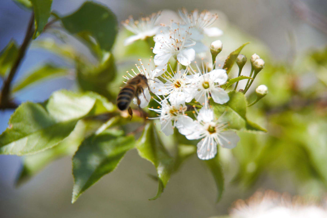 Spring Blossom Honey - Beatty Honey
