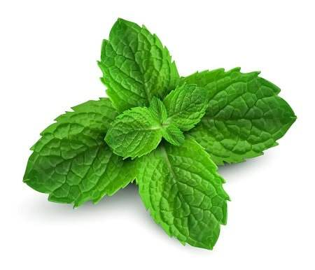 Angel's Mist Peppermint Essential Oil