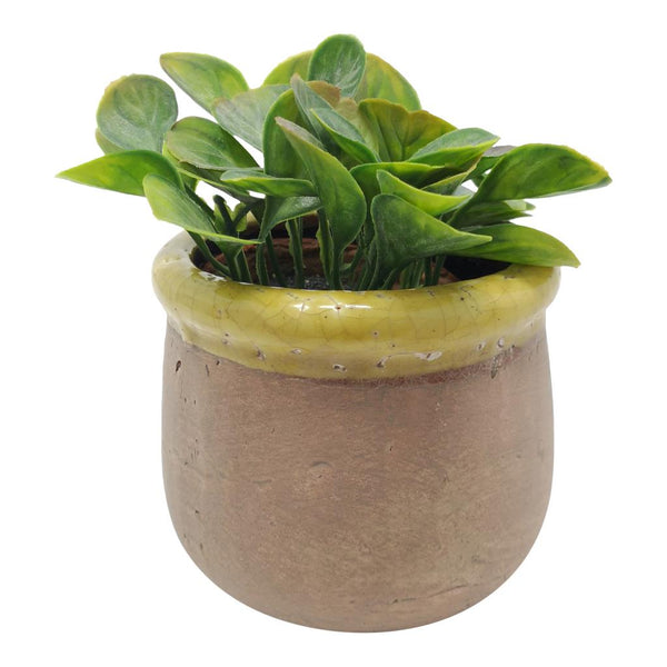 Rustic Pot with Yellow Trim