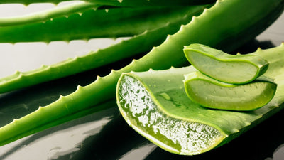 ALOE VERA BENEFITS AND USES