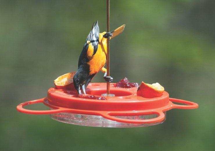 Bird's Choice 12 oz. Oriole-Fest Oriole Feeder