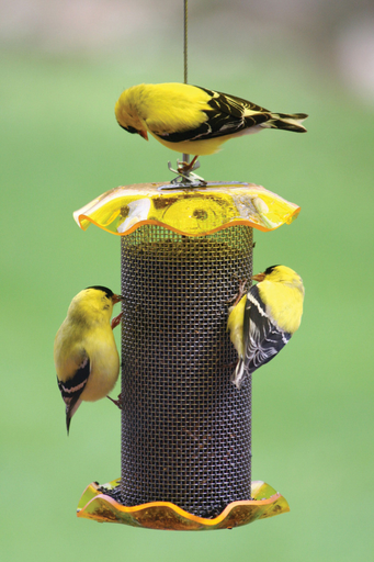 Bird's Choice 1qt Forever Feeder Yellow (Nyjer)