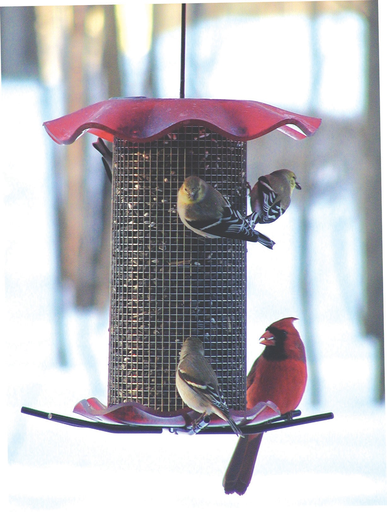 Bird's Choice Forever Feeder - Red (seed)