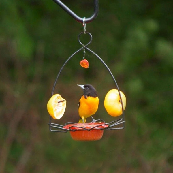 Bird's Choice Oriole Flower Feeder