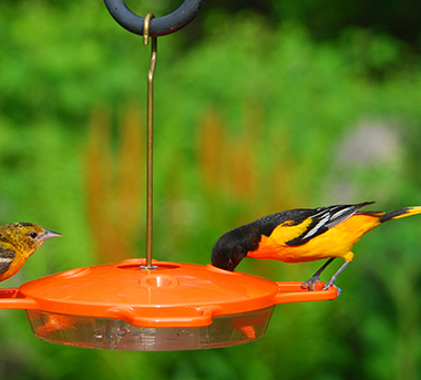 Oriole Nectar Feeder by Aspects