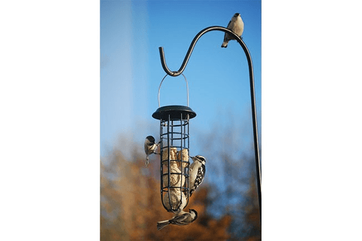 Wildlife Sciences Suet Ball Feeder