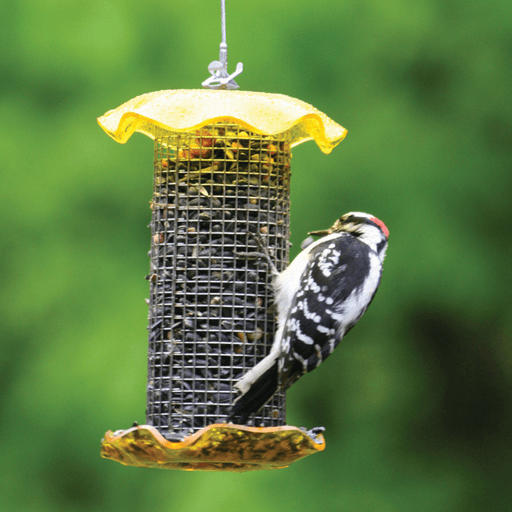 Bird's Choice 1 Quart Yellow-Forever Feeder (Sunflower)