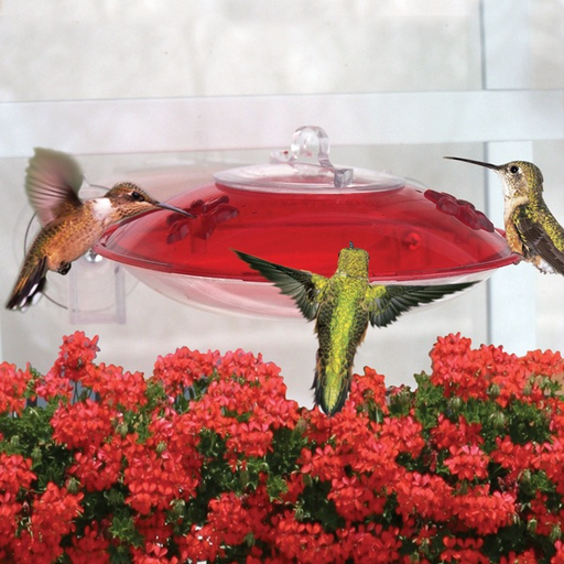 Droll Yankees Red Window Hummer-3 Hummingbird Feeder