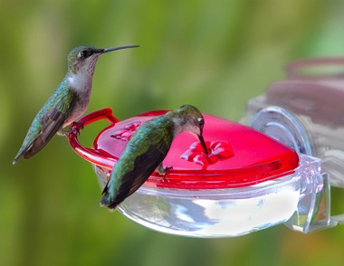 The Gem Window Hummingbird Feeder By Aspects