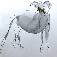 Bobby-the-whippet.ALison_Brown