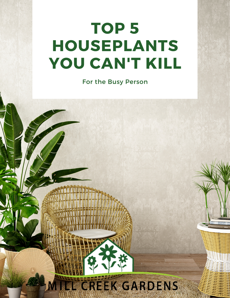 houseplants you can't kill, easy to care for houseplants,