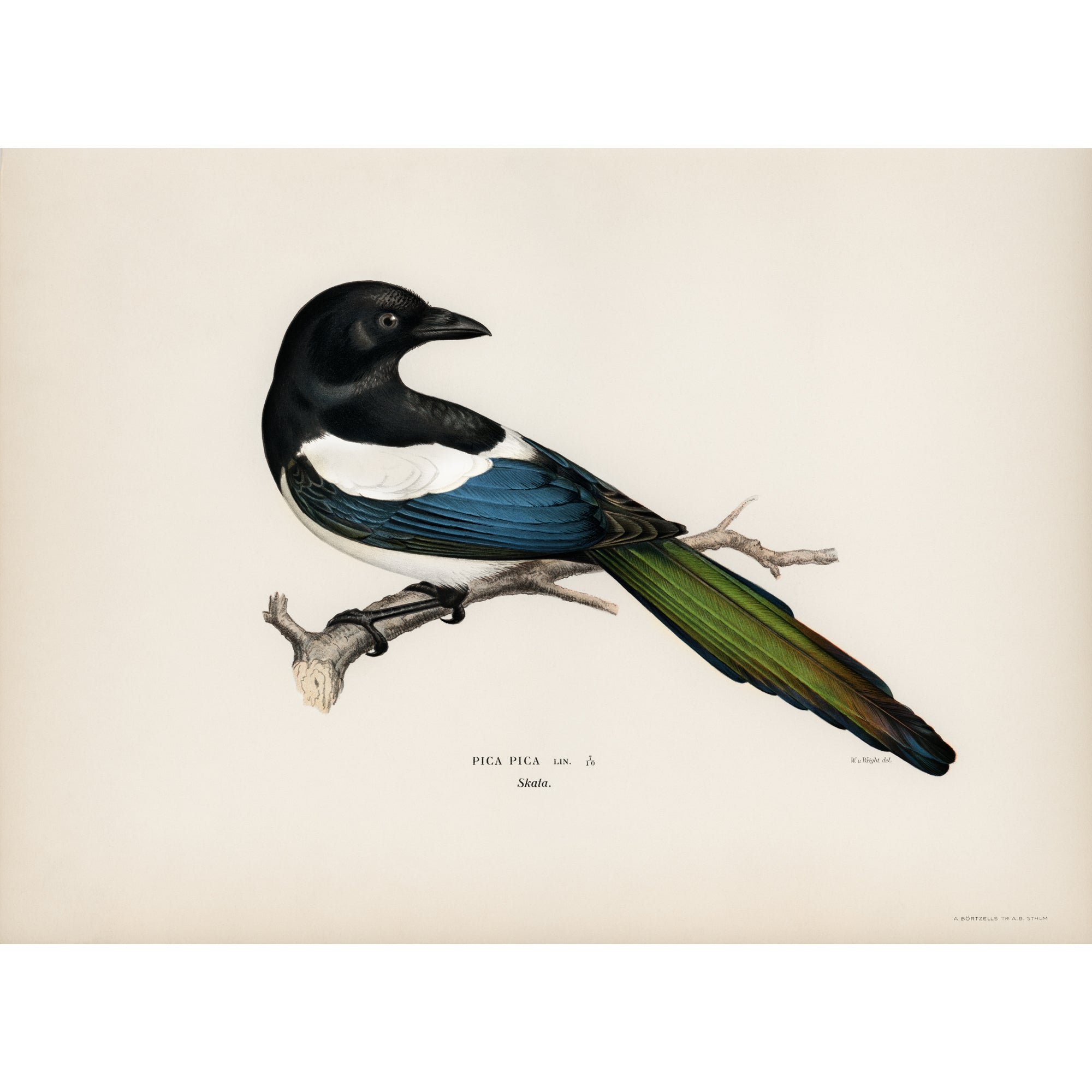 <i>Eurasian Magpie</i> by the von Wright brothers