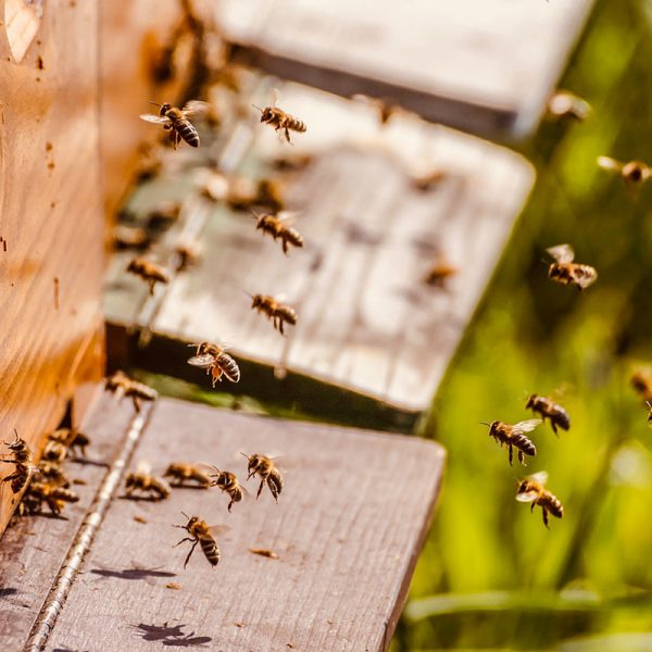 Beehive to save the planet