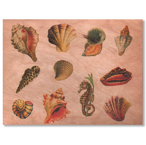 Sea Shell Wood Card