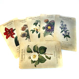 Tarot Deck Botanical Inspirations