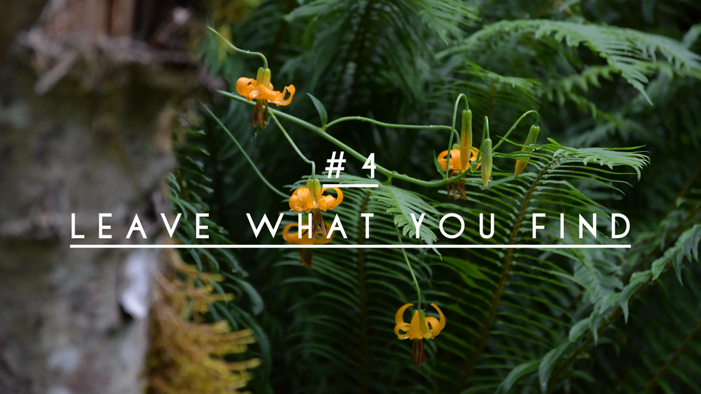 leave no trace principle 4 leave what you find