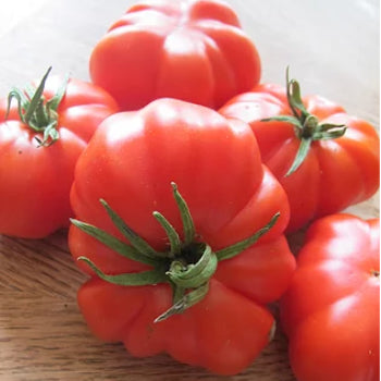 Tomato seedling (PasteStuffing - Rosso Sicilan) (pre-order)