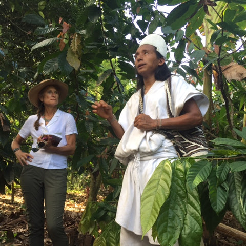 Arhuaco elder giving a tour of cacao farm