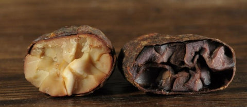 white ceremonial cacao bean image - contrast with dark chocolate cacao bean